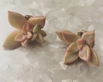 succulent earrings | living jewelry | wearable botanicals | earrings