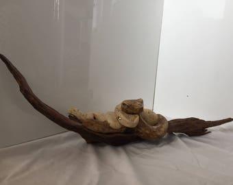 Snakes on drift wood