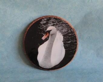 Swan photo and Cork trivet
