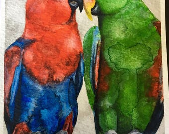 Sweet Parrots Portrait