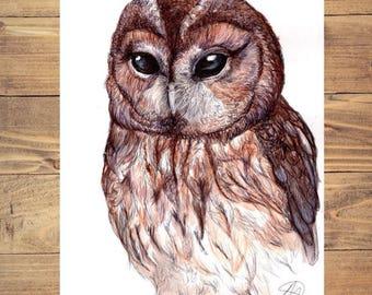A4 print Tawny owl