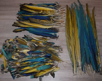 Wholesale lot of 750 are gold and blue Macaw feathers, all sizes and colors combined