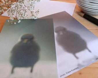 The chick - map postcard 10 x 15 cm
