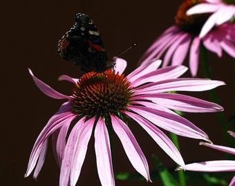 Fine Art Photography, Flower Photography , Flower Wall Art, Butterfly Photography, Landscape Photography ,