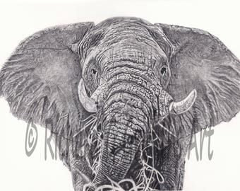 A4 Elephant from Original Drawing Unmounted