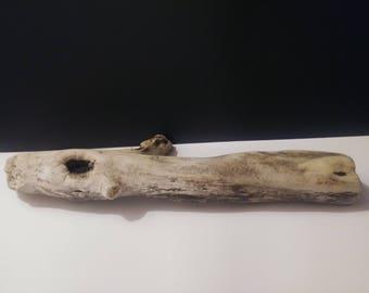 Pacific Ocean Driftwood