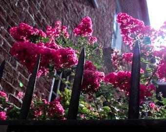 Flower Lightroom Presets