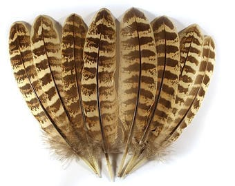 Pheasant Hen Wing Feathers 10603