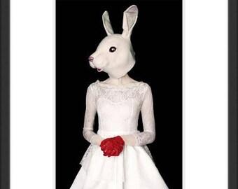 Photography Art White Rabbit