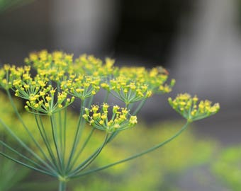 Yellow flower photograph digital download