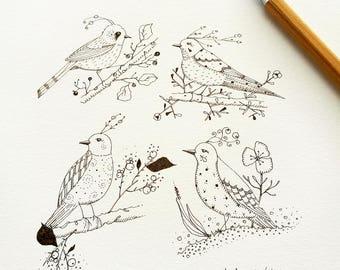 Aviary Study 03 Original Drawing