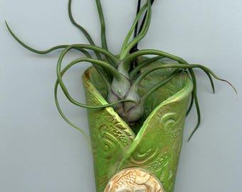 Polymer Clay Wall Vase with live Air Fern  GRWAF 1