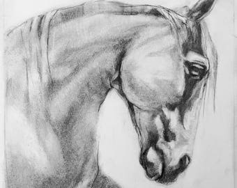"""PRINT 10x10"""" Horse Drawing Graphite (12x12) Total"""