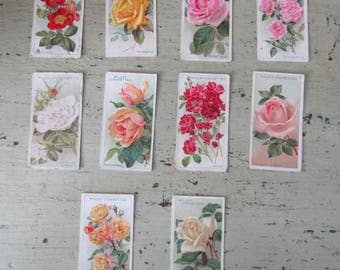 Smell The Roses -  Vintage Cigarette Cards of Roses - Set of 10 - Wills's. - 1930's - Set #3
