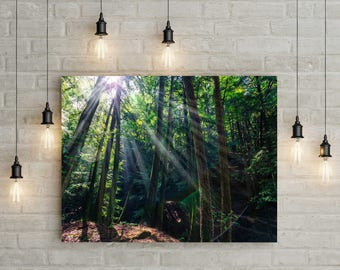 Hocking Hills Ohio Light Spill Landscape Photograph on Metallic Paper or Canvas