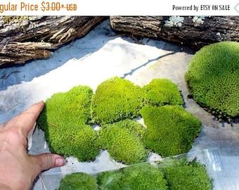 Save 15% Preserved Moss-Pillow Moss-Cushion Moss-NO WATER needed-Now by the PIECE-Fairy Garden Moss-Wedding Moss