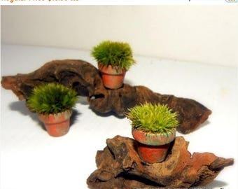 Save25% 3 Miniature Terra Cotta Pillow Moss Pots-Moss Filled pots only here