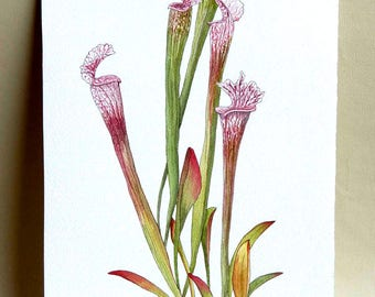 Pitcher Plant watercolor painting