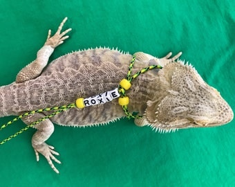 how to make a bearded dragon leash