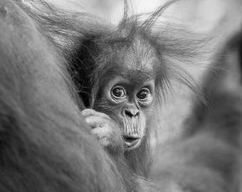 Animal nursery art prints, CUTE BABY ANIMALS, Set of 4 Black and White Photos, Elephant, Orangutan, Cheetah, Polar Bear, Safari Baby Shower