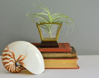 Glass and Brass Geometric Box - Wood Base Etched Display Container Mirrored Bottom Air Plant Holder
