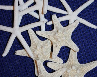 15% OFF 10 each white fingerling starfish and knobby armored starfish, free shipping, top quality starfish combo, crafts, bleached,