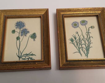 Vintage Blue Floral Botanical Miniature Art Prints King Ambler