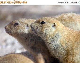 On Sale Prairie Dogs, Nursery, Tucson, AZ