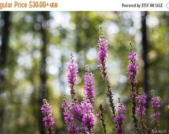 ON SALE Purple Flowers, Flower photograph, Wildflowers, Nursery Room Decor, Nature Prints, Large Wall Art, Purple Print, Flower Art Home Dec