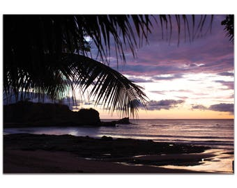 Coastal Wall Art 'Sunset Palms' by Meirav Levy - Beach Sunset Decor Tropical Palm Trees Decor on Metal or Plexiglass