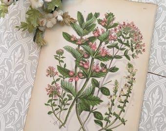 Vintage botanical print collectible home decor lithograph