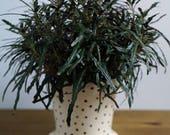 Ceramic Polka Dotted Planter - Succulent Planter - Succulent Pot - Mini Planter - House Warming Gift - Home Decor