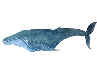 Humpback Whale 8x10 Watercolor Print