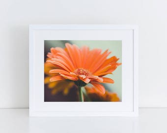 Orange Gerbera Daisy Fine Art Photograph Print Macro Flower Art Print Daisy Wall Art Flower Photography Floral Print Daisy Photo Orange Blue