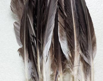 20 Goose spike Feathers various lengths for craft work