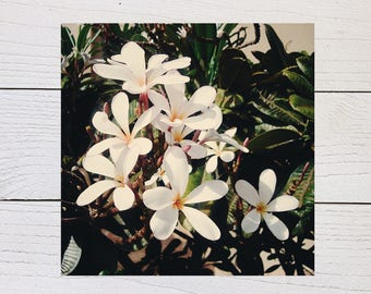 White Plumeria Flower Print, Hawaiian Plumeria, Floral Photography, Tropical Flower, Hawaii Wall Decor, Square Botanical Print, White Floral