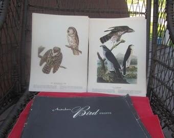 Audubon bird species Prints; Reproduction of 30 Audubon Prints