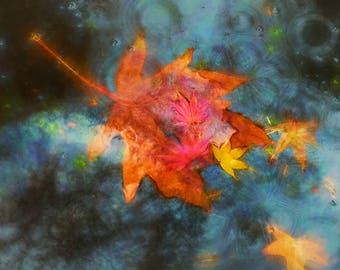 Fall leaves, Autumn colors, Fall leaves on a pond photo,