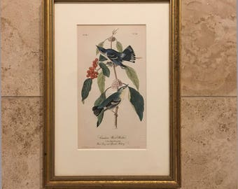 Original 1841 JOHN J AUDUBON Framed Print--*Carulean Wood Warbler*--No 18 Plate 86 (Framed or Unframed)