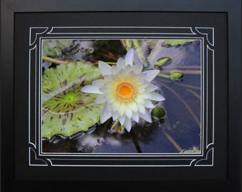 Framed and Double Matted Water Lily Photo