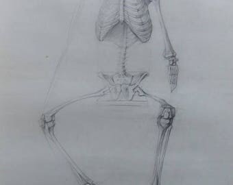 Human skeleton Original Skull Drawing Academical Anatomy  Vintage Pencil  Dark Tone Pictur Gift  Classical Sculpture