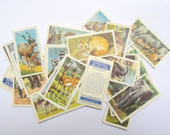 African Wildlife collectors cards: set of 34 ephemera cards featuring different animals. Collectable or for use in crafts, journals OT609