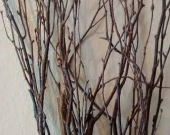 "Birch Tree Branches (40 individual branches) 20""-24"" - Great For Rustic Country Wedding Decorating"