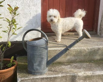 Large vintage zinc watering can with big nozzle