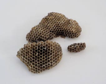 Natural Paper Wasp Nest • Natural Craft Supply Prop • Dried Used Wasp Nest Specimen