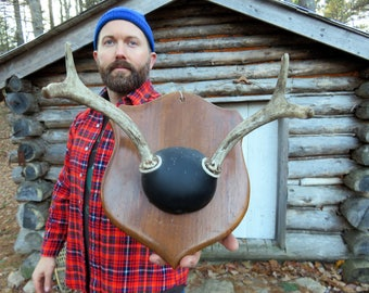Antique Whitetail Deer Mounted Antlers and Skull Cap.