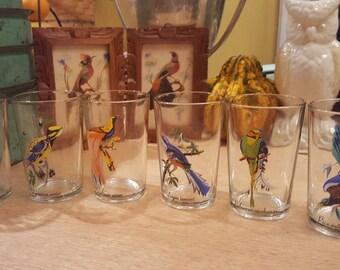 Tropical bird species juice glasses, vibrant colors, 8 oz capacity, complete set!