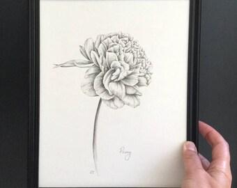 Peony original drawing