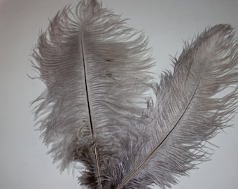 Five ( 5 ) silver grey first grade ostrich feathers 375-425mm