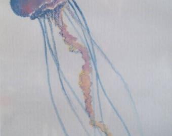 Drifting jellyfish